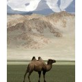 Mongolia 19th Century