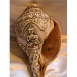 Conch shell trumpet; Tibetan 'Sankha'